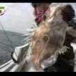 2 カワハギ釣りのはずがとんでもない魚が