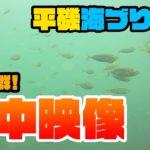 【水中映像】アジいっぱい。【平磯海づり公園20190713】