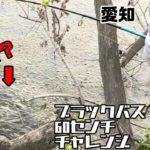 ロクチャレ#7    【バス釣り 愛知 庄内川】生命反応ありありの河!