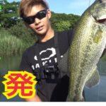 【バス釣り】ブラックバスは食ってもうまい!(前編)#バス釣り #おかっぱり #fishing
