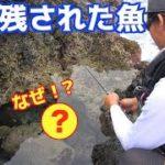 東京都伊豆大島で久しぶりのあの魚を狙う!!