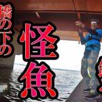 橋の下の怪魚を生レバーで釣る!