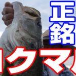 秋の琵琶湖でロクマル(61cm)のブラックバスが釣れた!【バス釣り】