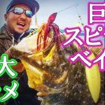 海でメガロドーン投げたら巨大ヒラメ釣れちゃった!