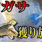 【水中映像アリ】網ガサ★近所の用水路で獲り放題!