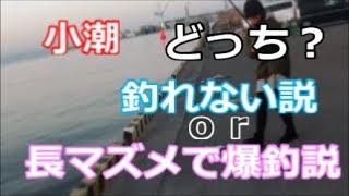 爆釣!小潮の釣り 兵庫突堤防 釣りに行くしな!