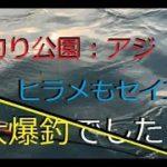 【釣りだら】海釣り公園サビキ釣り~高級魚が釣れた~