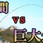 リールなんて要らん。竿だけで巨大魚を釣り上げる!