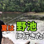 夏休み目前の野池にバス釣りにやって来たら・・・