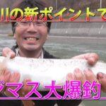 【釣り】夕張川の新ポイントでニジマス大爆釣!!