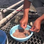 サビキ釣りの方法(アジゴのさばき方)福岡市海づり公園