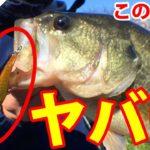 【バス釣り 春】あのシャッドが釣れすぎる!!〔五三川〕