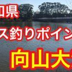 向山大池 愛知県 バス釣りポイント ブラックバス