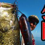 琵琶湖ガイドやめたので最大魚を釣った裏パターンを公開!