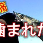 凶暴なバケモノ魚に噛まれてとんでもないことにっ!?
