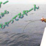 簡単に色んな高級魚がボコボコ釣れちゃう釣り【鯛ラバ】