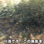 とんでもない魚影!