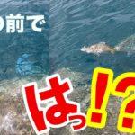 ルアーで釣れた魚に更に巨大魚が襲いかかって来るやつ!!