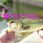 ブラックバスを釣って食べる。ラージとスモール食べ比べ