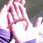 【バス釣り】川バスの釣り方を詳しく解説してみた。【広川】