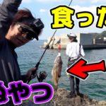 【猛毒】秋イカを釣るはずが毒魚パラダイスだった・・