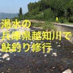 【鮎釣り】渇水の兵庫県越知川へ鮎釣り修行に行ってきました!