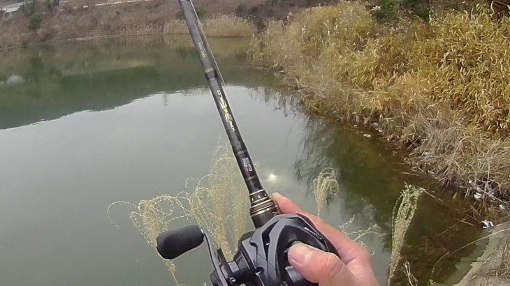 1月下旬、真冬の野池でブラックバス釣り。一応釣れた、、