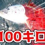 100キロ級の本マグロがついに、、、!!