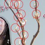 【鳥パターンで釣る】40万円の高級オウムを丸呑みにする怪魚を釣る。
