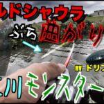 【五三川】ワールドシャウラをぶち曲げるビックバス降臨!!