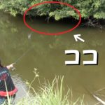 【バス釣り】絶対に釣れる池の絶対にバスがいるところ