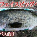 【淀川】【バス釣り】サーフェイスビッグベイト