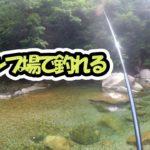 川釣り水中撮影もしながら板取キャンプ場で釣りに挑戦