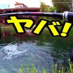 【バス釣り】春のブラックバス釣り堀の入食いはエグイ!