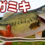 琵琶湖 メガミキ→ディープブレイク→巨大なブラックバス ジカリグ ヘビキャロ バス釣り