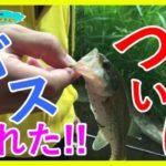 【バス釣り初心者】新しい野池でついにブラックバス釣りあげた!!