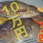 堤防から釣った巨大クエ2匹を全部使って豪華料理!!