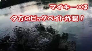 【バス釣り】夕方のビッグベイトで炸裂!マイキー115