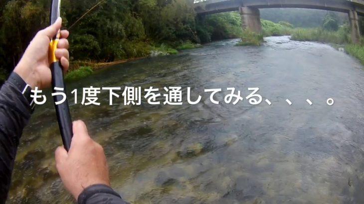 鮎釣りシリーズ第1弾・3年ぶりの友釣り(菊池川水系編)