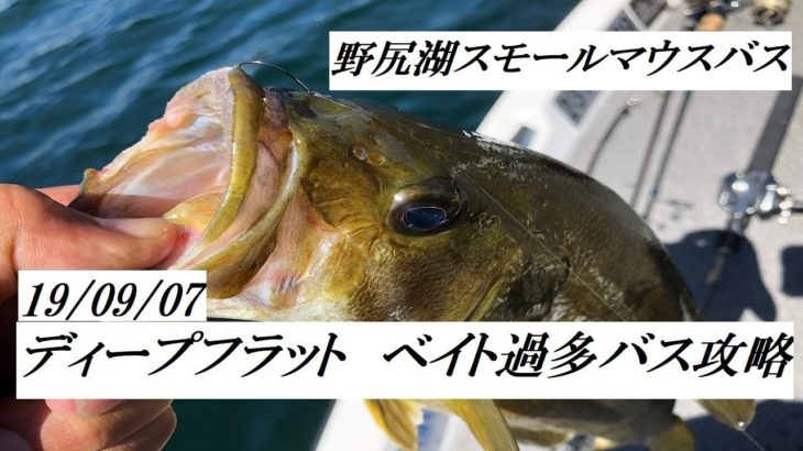 野尻湖スモールマウスバス 19/09/09 ベイト過多バス攻略