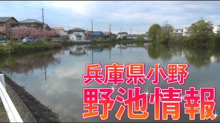 ブラックバス 2017年4月後半兵庫県小野