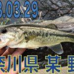 2018.03.29 神奈川県 某 野池 ブラックバス釣り