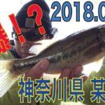 2018.04.07 神奈川県 某 野池「ハマった!!の巻」ブラックバス釣り