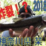 水面炸裂!? 2018.04.12 神奈川県 某 野池 ブラックバス釣り