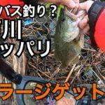 2019年 江戸川 バス釣り調査 関東 都内 バス釣り