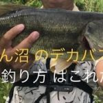 最新✨2019年 9月 埼玉 バス釣り びん沼川 デカバスGET‼️