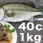 ブラックバスを釣って食う 40cm 1kgの良型で作るバスのさっぱり煮 River-fishing Catch & Eat