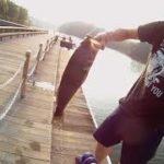 鹿児島 薩摩湖 ギルの泳がせで57cm‼️ バス釣り ブラックバス