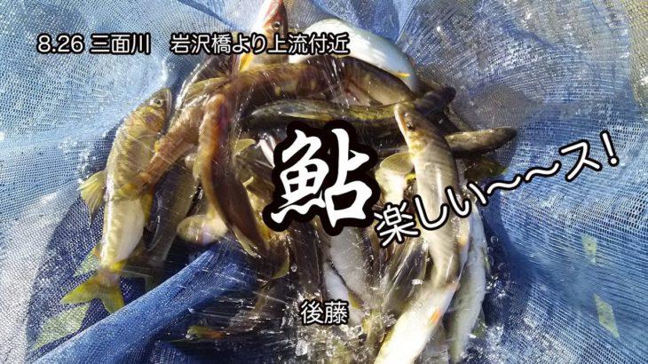 8 26  三面川 岩沢橋より上流付近 鮎 楽しい〜〜ス