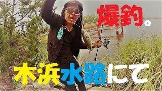 【バス釣り】また爆釣だ!琵琶湖木浜水路にて【ゆう作兄さんのチョイ釣りMAX】
